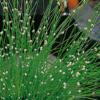 Planter til havedammen Fru Heibergs hår