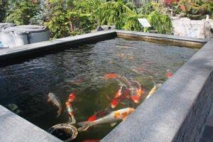 Superkoi fiskeafdeling 4