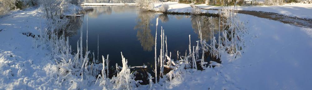 Vintersikring af havedammen