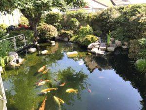 vandbassin havedam erhverv 11