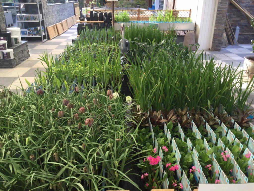 Nye planter til havedammen 2